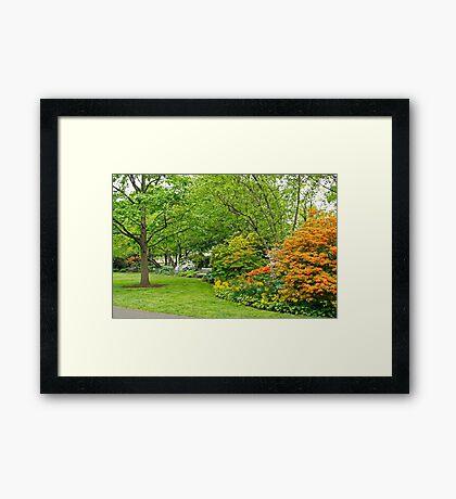 Philadelphia's Azalea Garden - Pennsylvania - USA Framed Print
