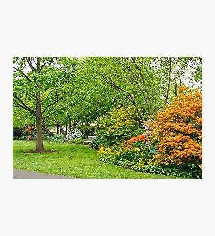 Philadelphia's Azalea Garden - Pennsylvania - USA Photographic Print