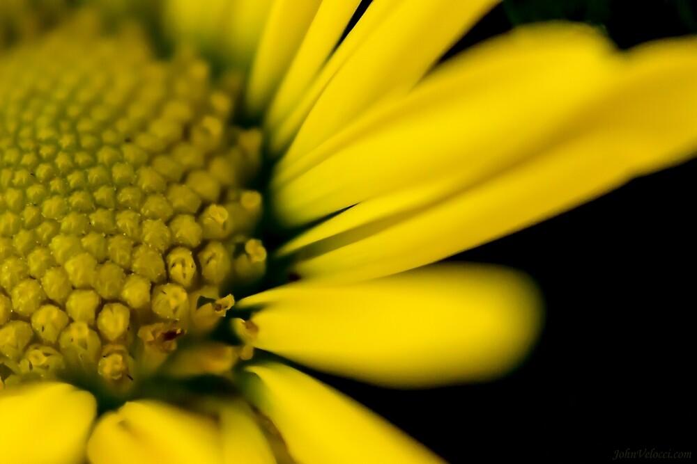 Melo Yellow by John Velocci