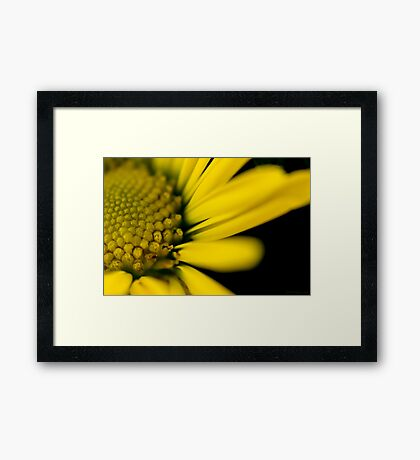 Melo Yellow Framed Print