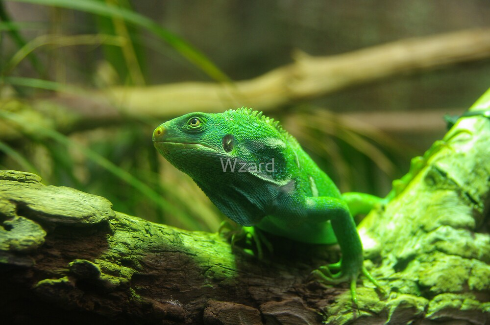 Reptile by Wzard