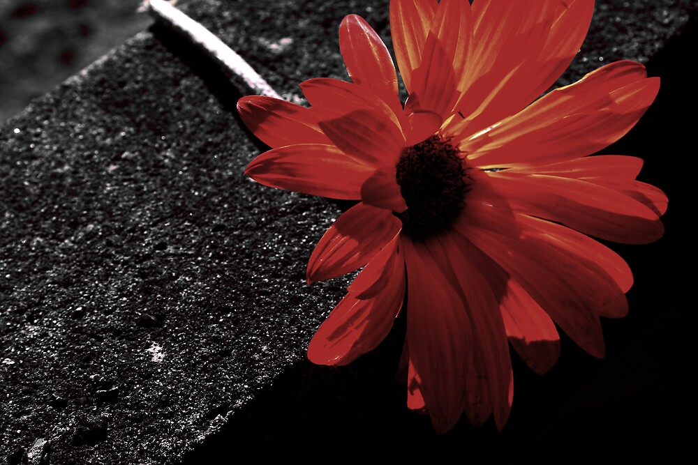 red on black by Matthew  Smith