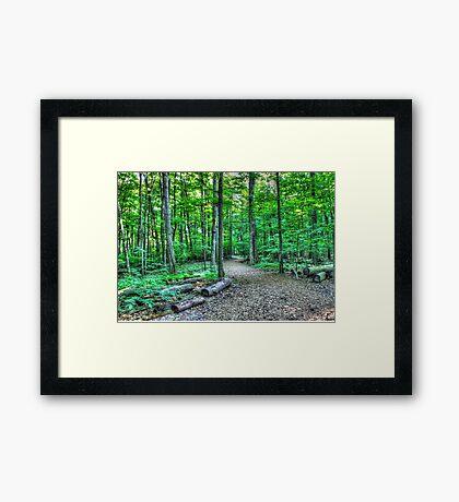 Forest 3 Framed Print