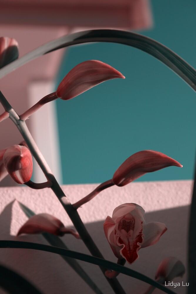 Hide to Bloom by Lidya Lu