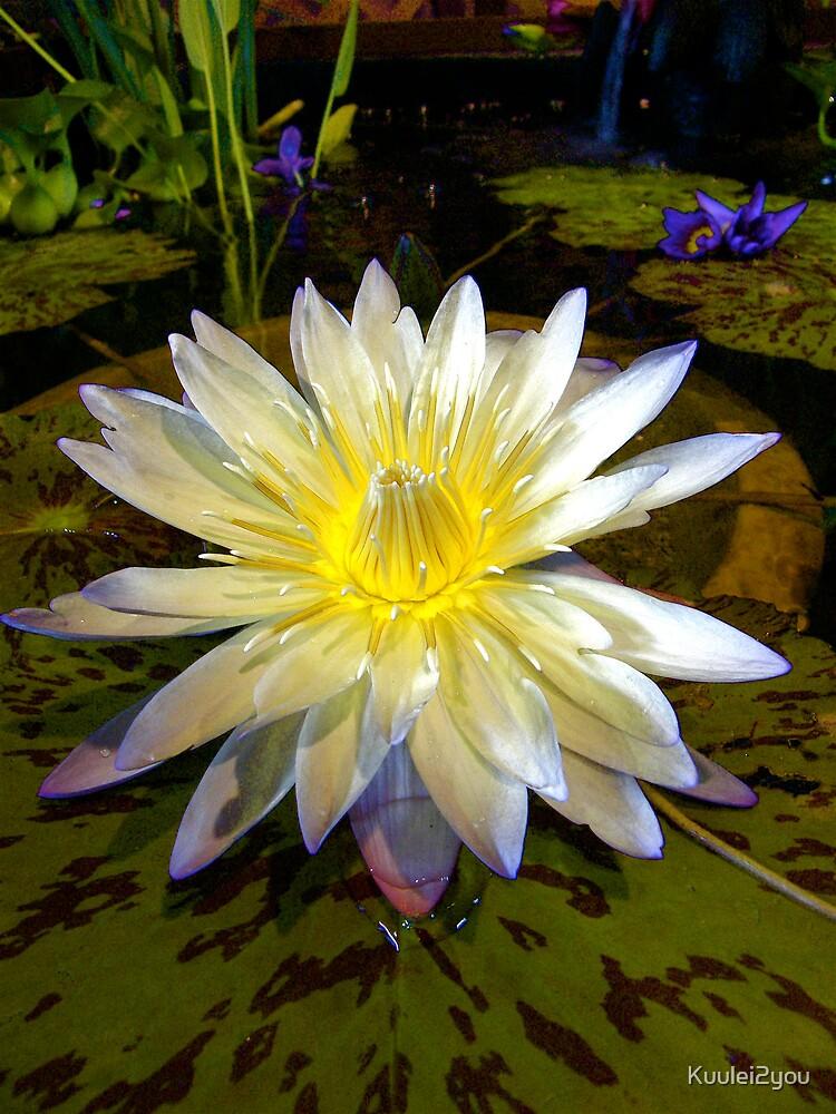 Smokie in Pond by Kuulei2you