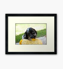 winnie and her duck Framed Print