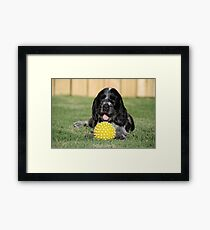 winnie and her ball Framed Print