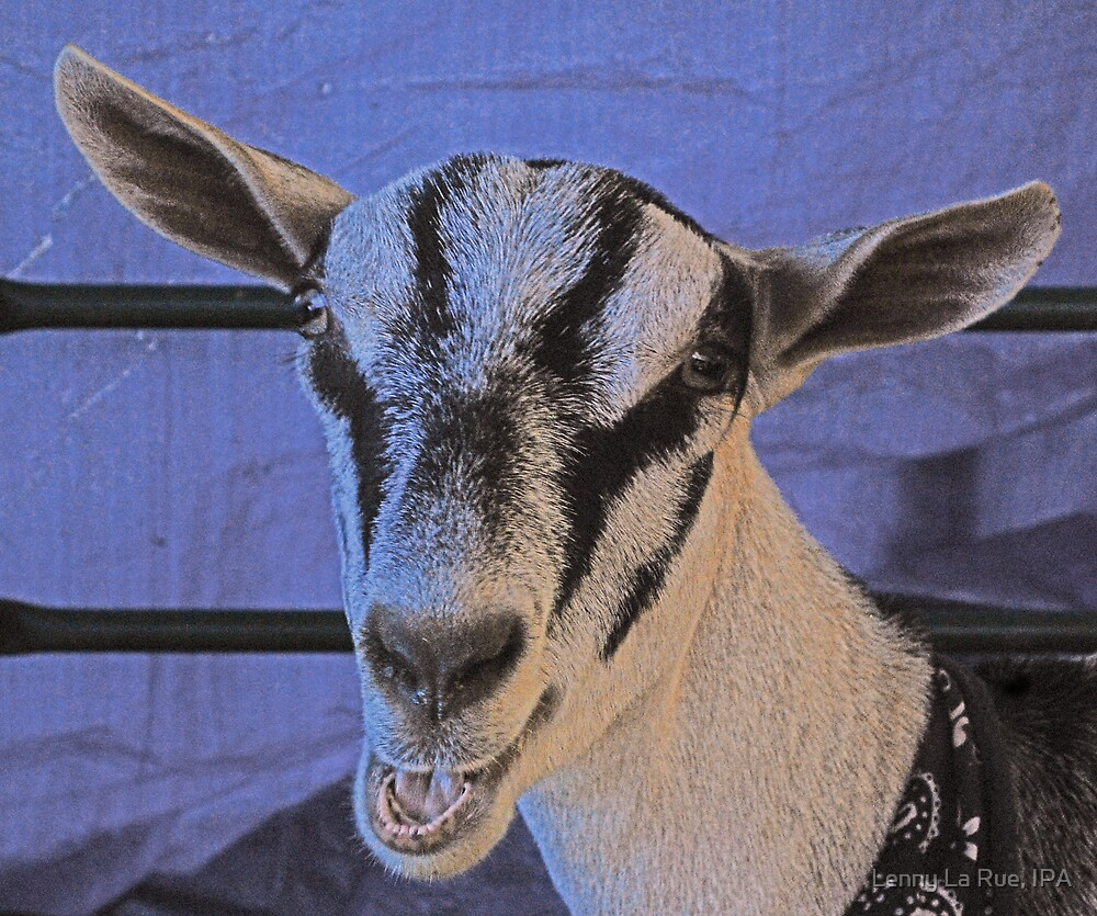 Face-to-goat face by Lenny La Rue, IPA
