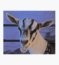 Face-to-goat face Photographic Print