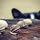 Cat Snails by Trish Mistric