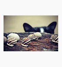 Cat Snails Photographic Print