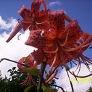 sky flower by gauthier