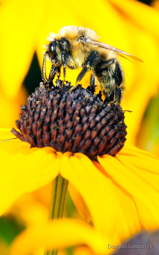OH! A Bee! by Douglas Gaston IV