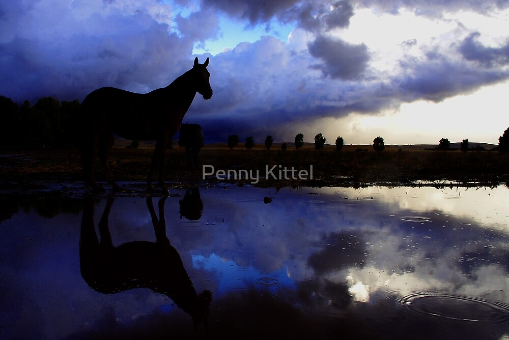 Storms a'hoof by Penny Kittel