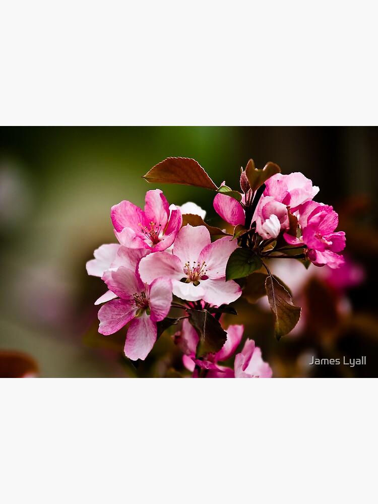 花見 by corwin