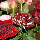 Flores by RoyAllen Hunt