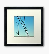 moony day Framed Print