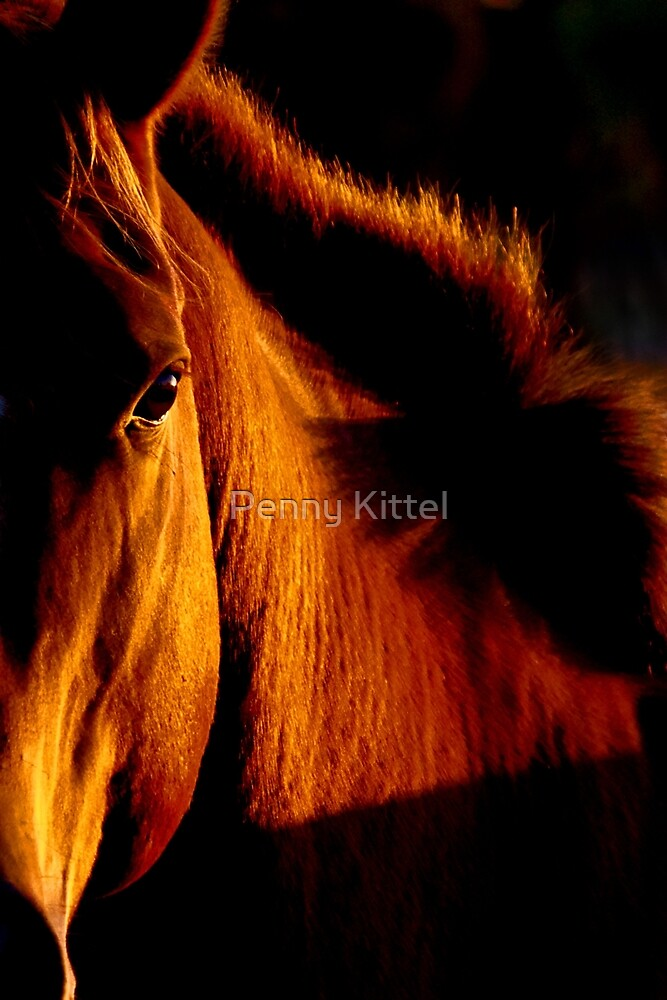 Stallion of amber by Penny Kittel