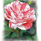 A HERSEY KISS ROSE by FSULADY