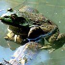 Bullfrog by tkrosevear