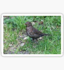 bird on the meadow Sticker