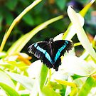 Butterfly Photography 001 by makeitsoph