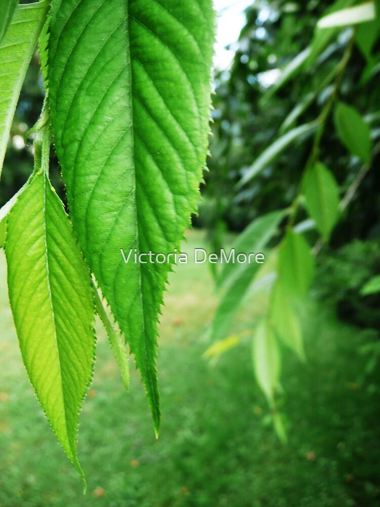 Green Drapery by Victoria DeMore