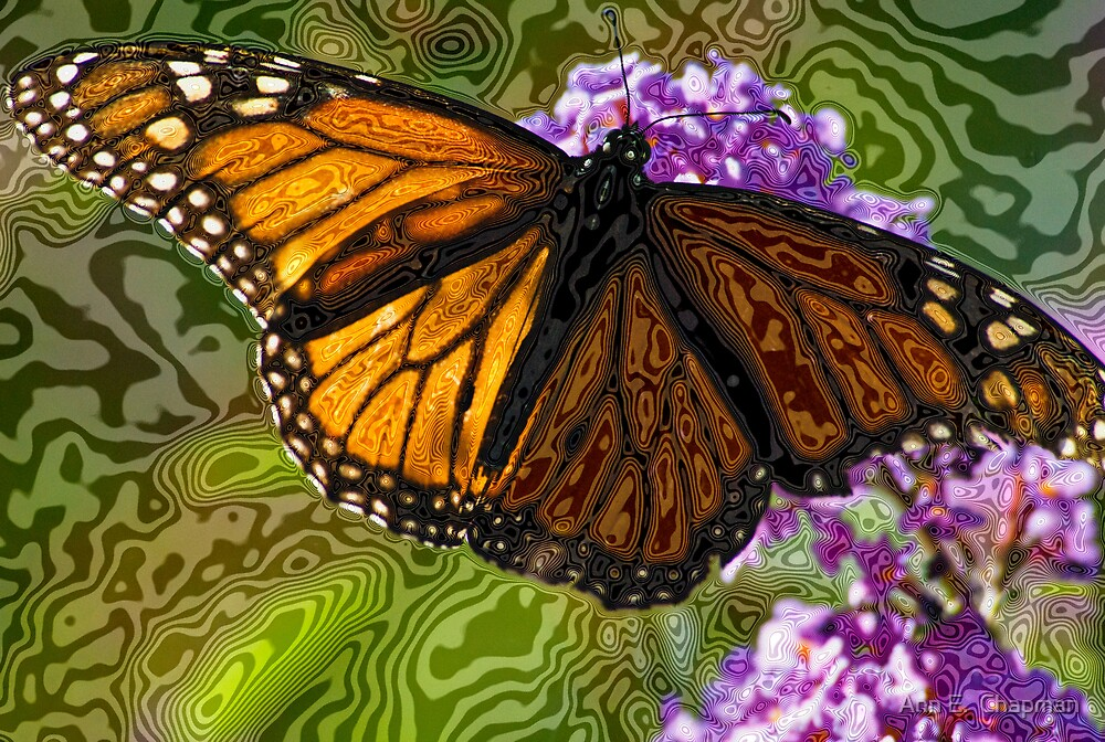 Sun-lit.....Butterfly by Ann E.  Chapman