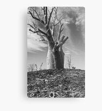 Boab Tree  Metal Print