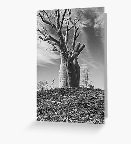 Boab Tree  Greeting Card