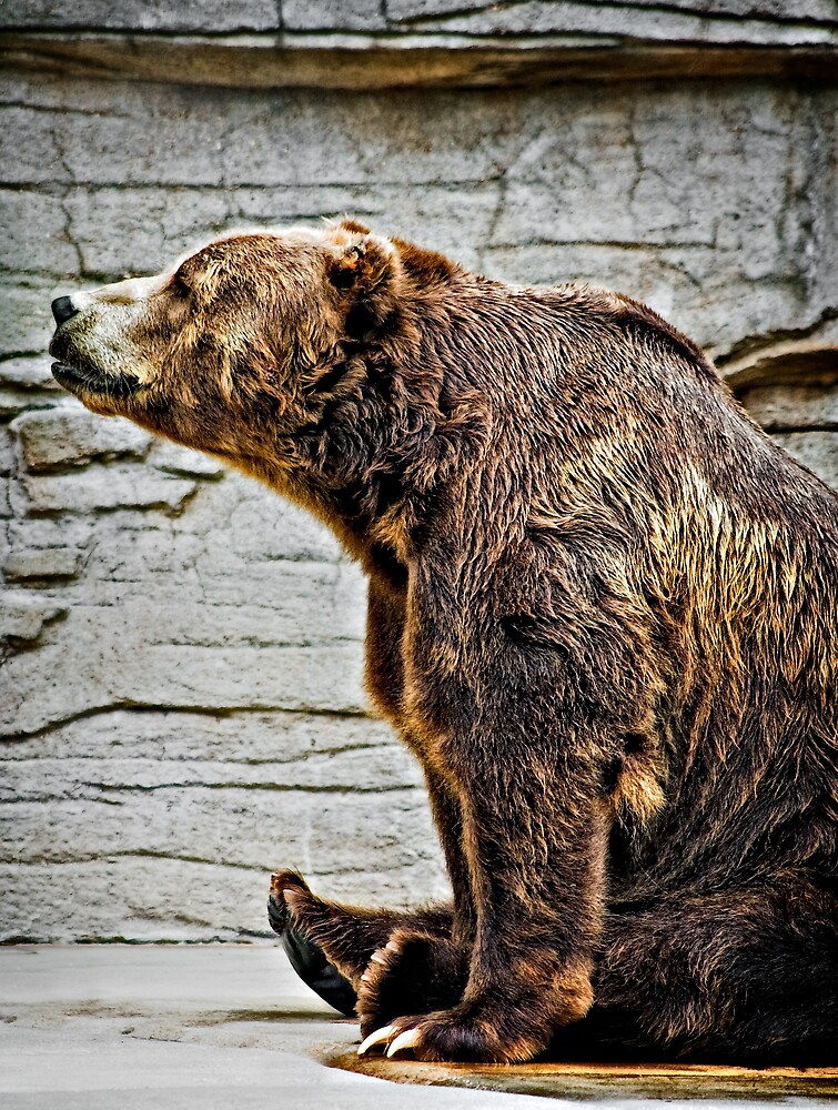 Grizzly by Scott Ward