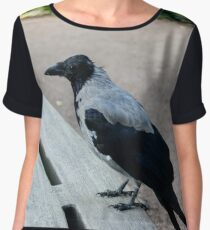 A gray crow sits on a park bench Chiffon Top