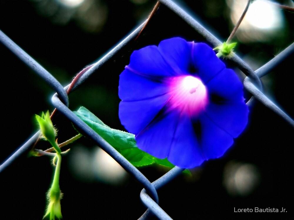 blu by Loreto Bautista Jr.