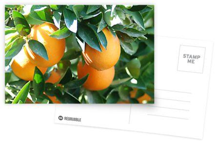 oranges by jon  daly