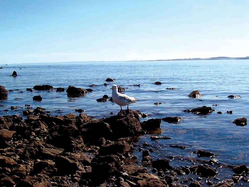 seagull by jezza