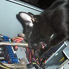 Lil Bear Helps Fix Computer by katreneekittel