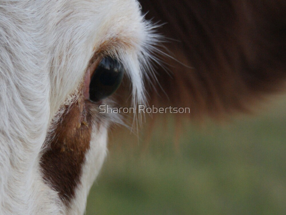 COW by Sharon Robertson