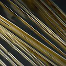 Golden Coffee Bags by rrushton