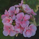 Pink Geraniums by Gerda Grice