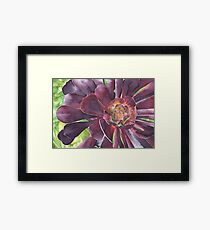 Purple Aeonium succulent at Bodnant Gardens - Aquamarkers. Framed Print