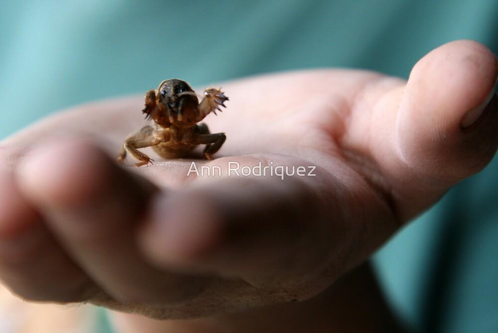 Hold Me! by Ann Rodriquez