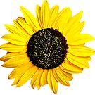 Sunflower Drawing Yellow Happy Flower Laptop Water Bottle Tumblr by MyHandmadeSigns