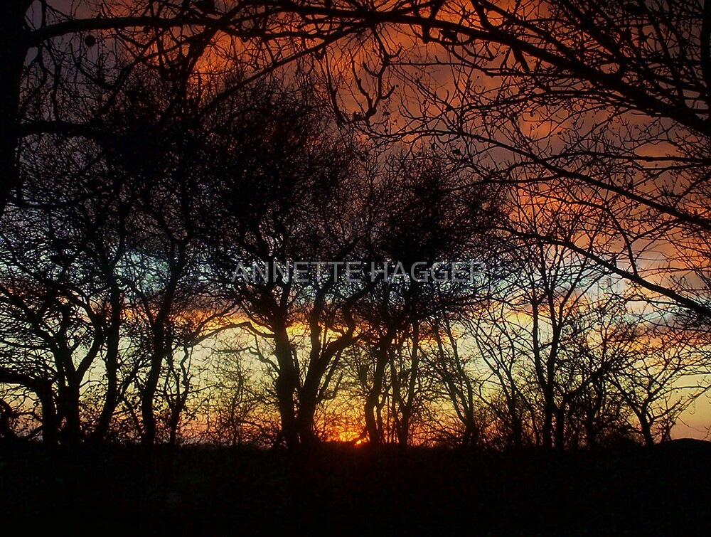 LIGHT THROUGH THE TREES AT SUNSET by ANNETTE HAGGER