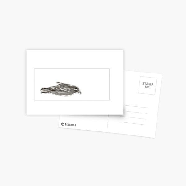 Fulmar Postcard