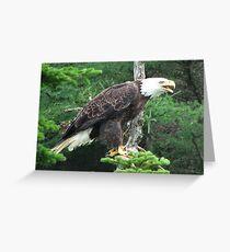 Chars Eagle Greeting Card