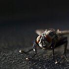 alien fly landing by jude walton