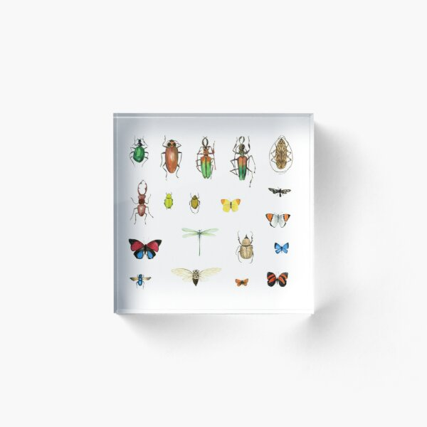 The Usual Suspects - insects on white - watercolour bugs pattern by Cecca Designs Acrylic Block