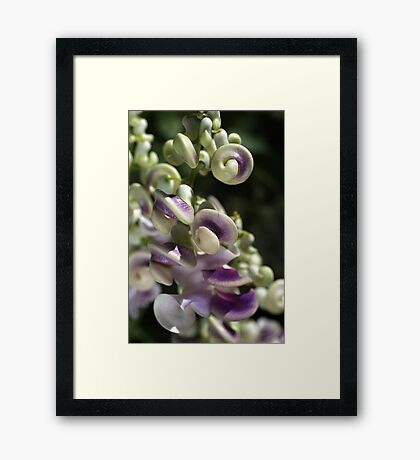 Corkscrew Vine Flower Framed Print