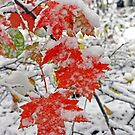 Red Maple Leaves Chilling Out by Terri~Lynn Bealle