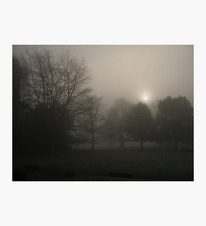 Foggy Foliage Photographic Print